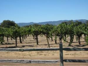 Wine Country 095